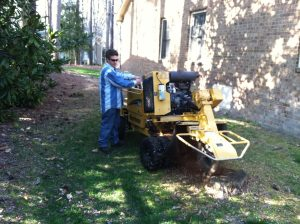 Tree Cutting Services in Williamsburg -Trimming, Removal, Stump Grinding